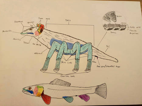 Basic Arachnotherian anatomy