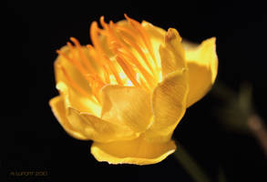 Fiery Flower by aurionPhoG