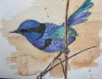 Fairy Wren in watercolour