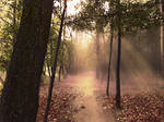 Path in the forest ( sunset light) Premade