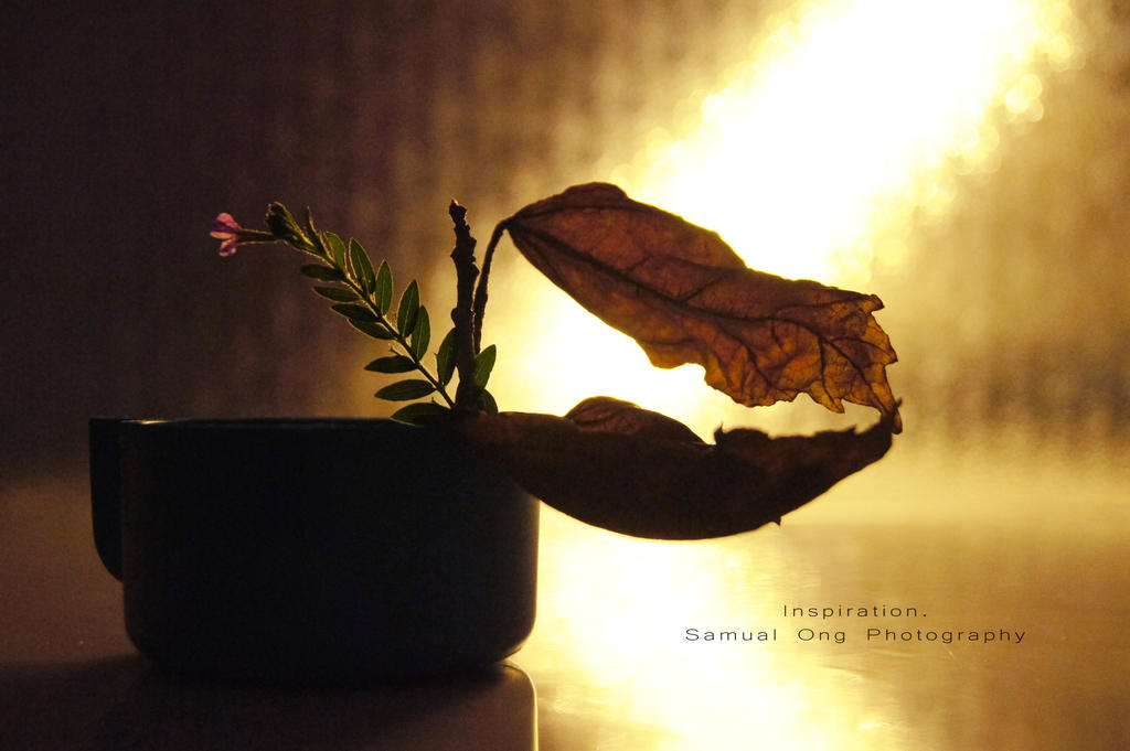 Inspiration. by samong98