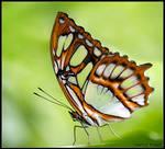 Butterfly v3