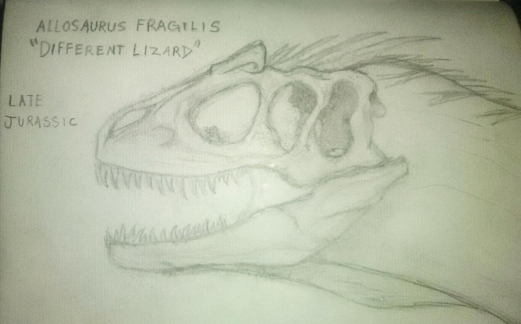 Allosaurus Fragilis Sketch by justinedavis426