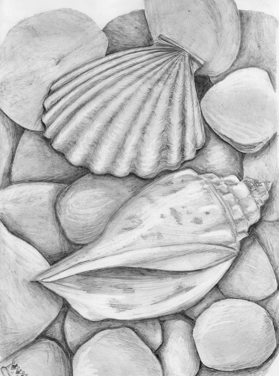 sea shells by tamagotchitam on DeviantArt