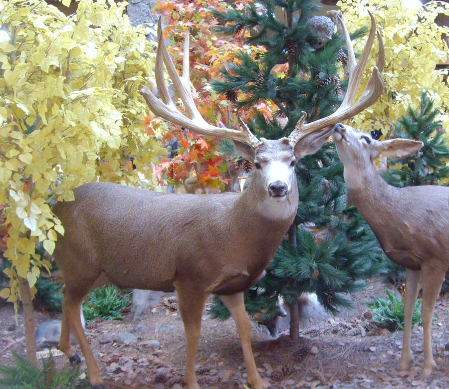 mule deer stock by fetherhd