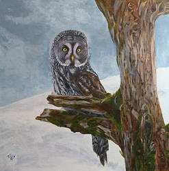 Great Grey Owl by quiltineb