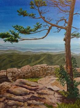 Overlook Pine