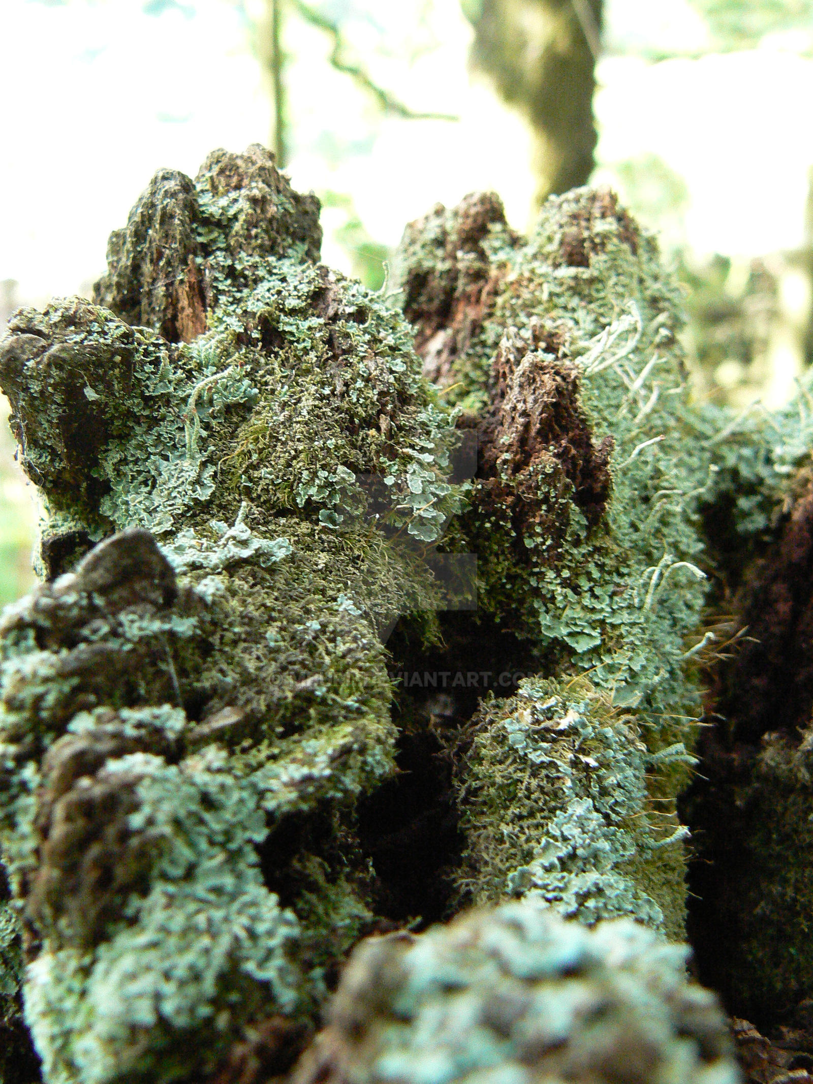 Lichen covered tree stump by mburl on deviantart for What is a tree trunk covered with 4 letters