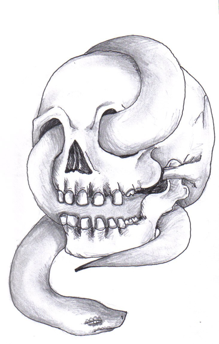 skull and snake sketch by max54995 on deviantart
