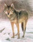 [old art]Wolf study