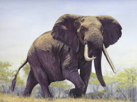 Elephant 1 by DryJack