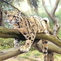 Clouded Leopard by DryJack