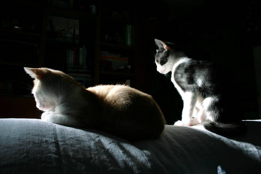 Kittens in the light