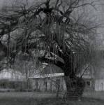 Spirit tree...