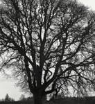 Malevolent tree... by wolfcreek50
