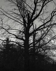 Touch black skies... by wolfcreek50