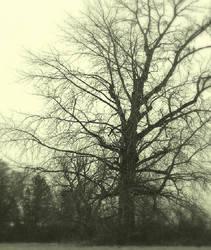 Arising gloom... by wolfcreek50