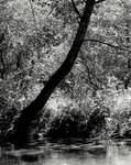 Haunted grove...