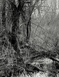 A dark and wretched land... by wolfcreek50