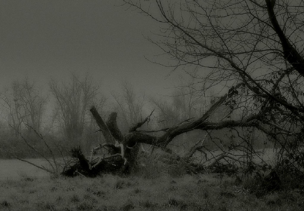 Silent decay... by wolfcreek50