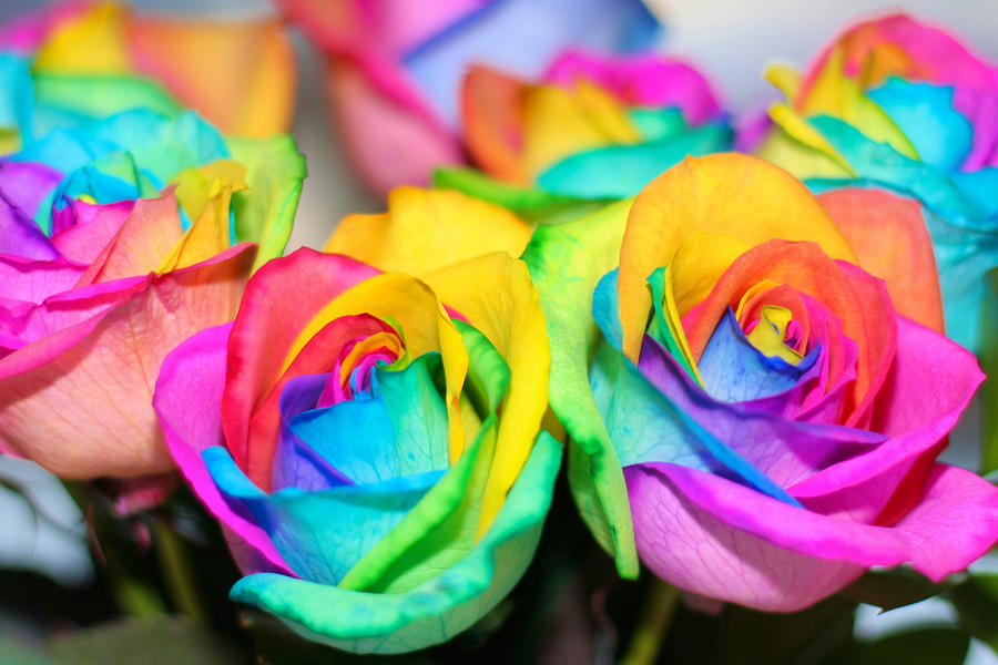 Rainbow roses by wabbytwax on deviantart for Where can i buy rainbow roses