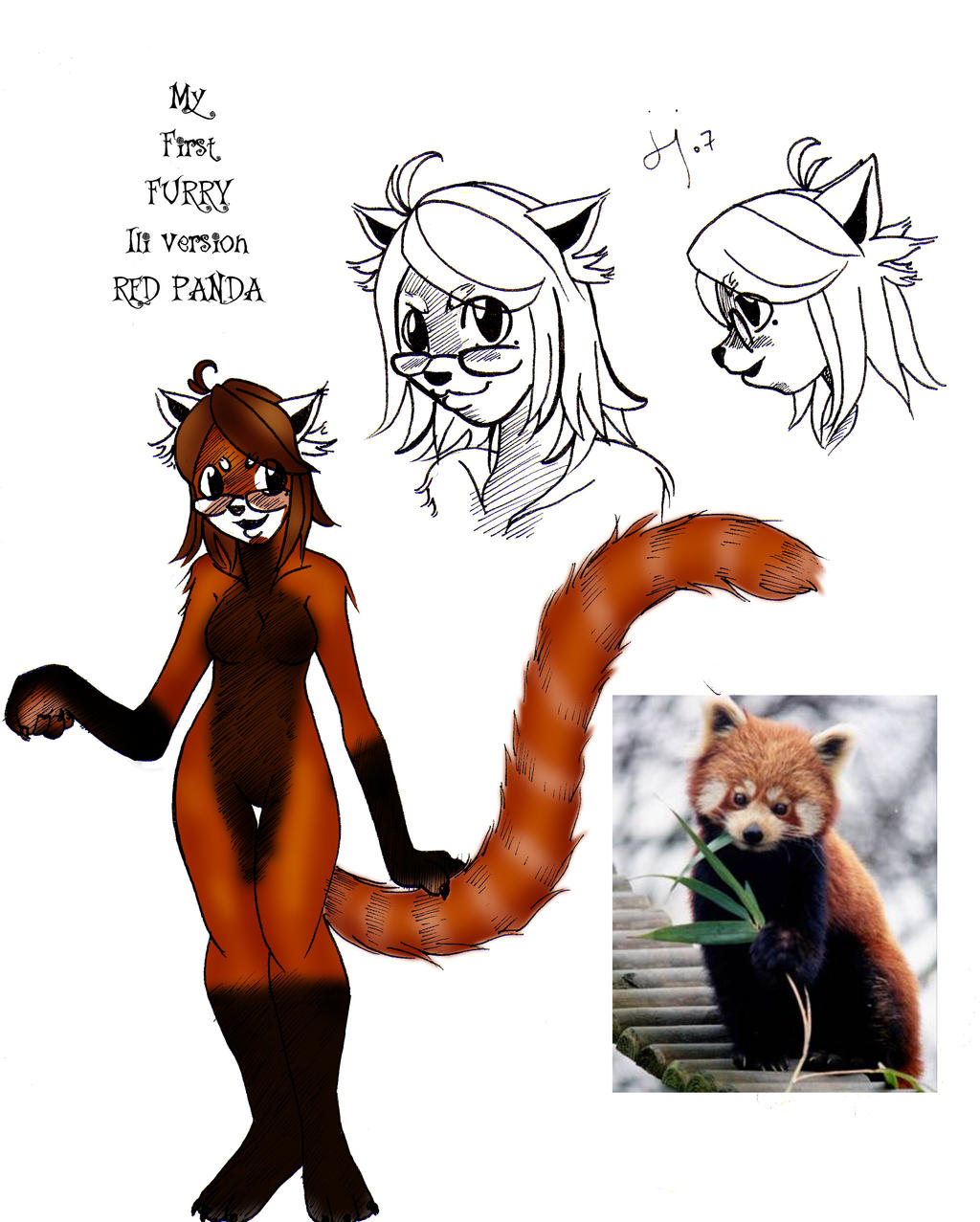 ILI THE RED PANDA First FURRY by jedilover02Red Panda Drawing Furry