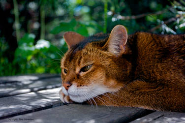 A cat daydreaming by tznu
