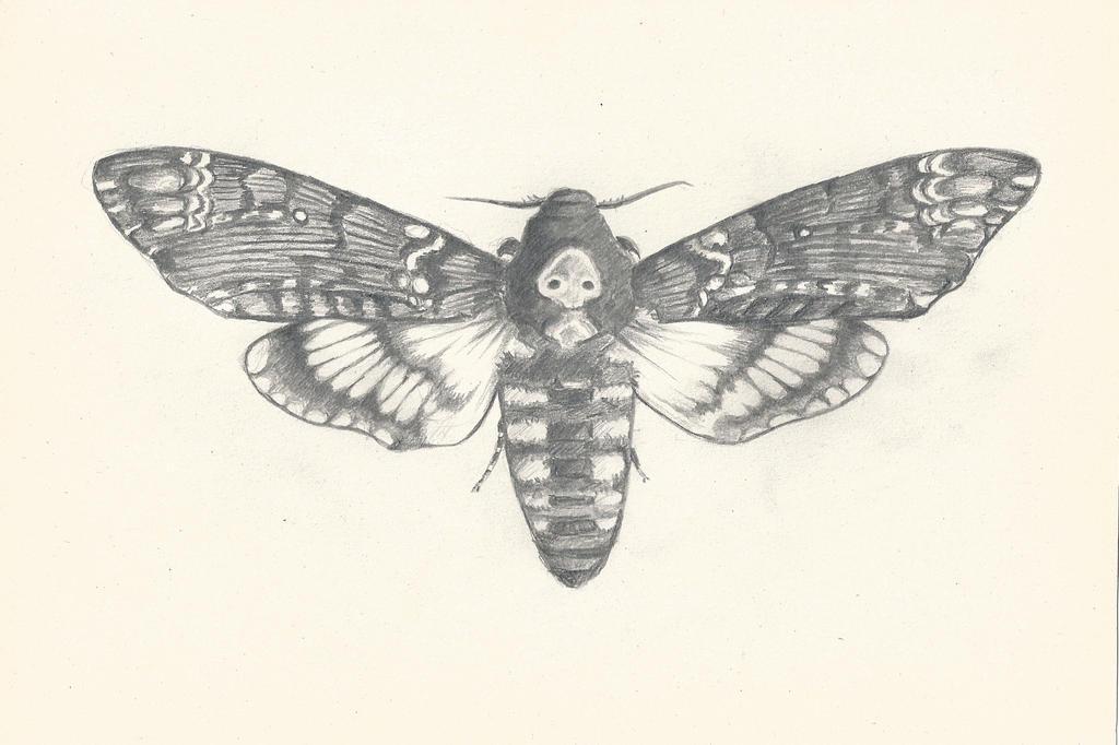 Moth drawing - photo#51