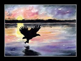 White-tailed Eagle by czajka