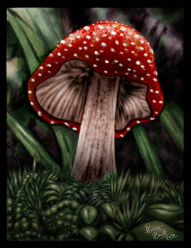 The Red Mushrom