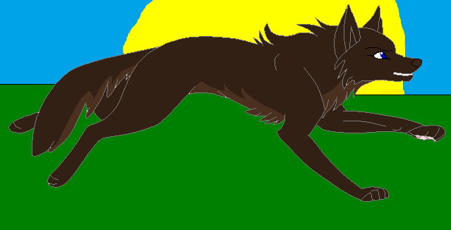 ~Running Through The Sunset~ (Contest by RavenpawWarrior