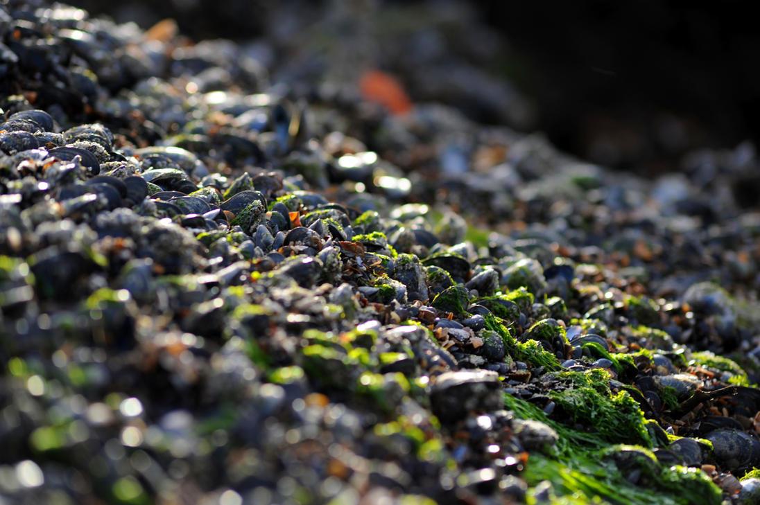 Shells on the Rocks by xBiggis