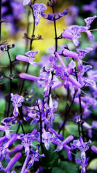 World of Purple by Kami-no-kuroi-namida