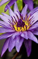Purple Magic by Kami-no-kuroi-namida