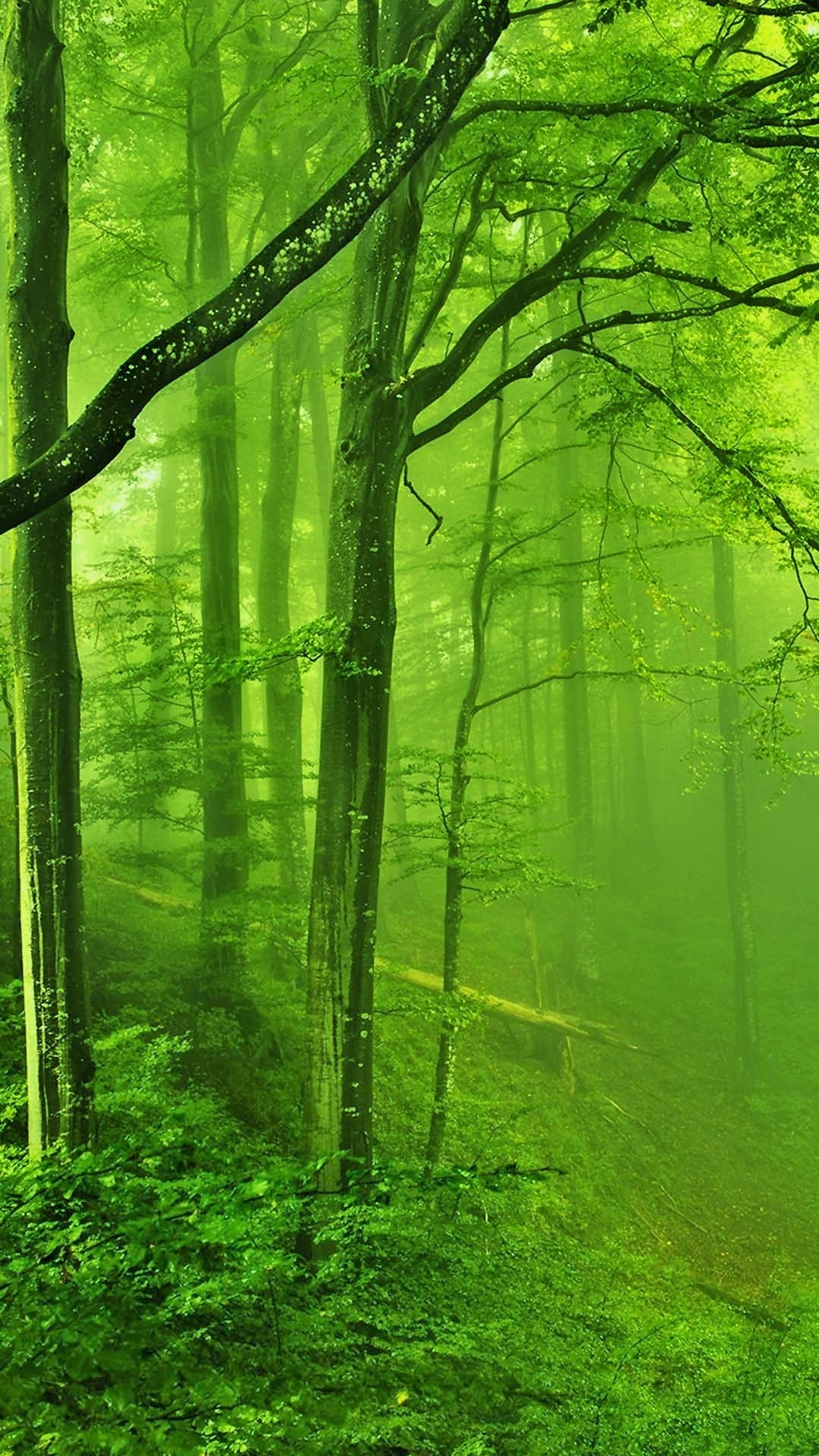 Green misty forest catalog photo
