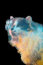 Cat Of Life
