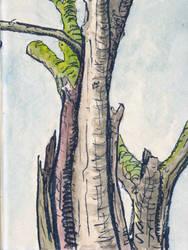 Trees by circumlocutrix