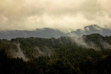 Foggy day by joannacora