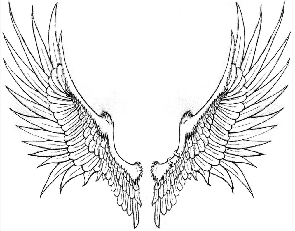 Line Drawing Wings : Brack s wings for tattoo by katryn noquisi on deviantart