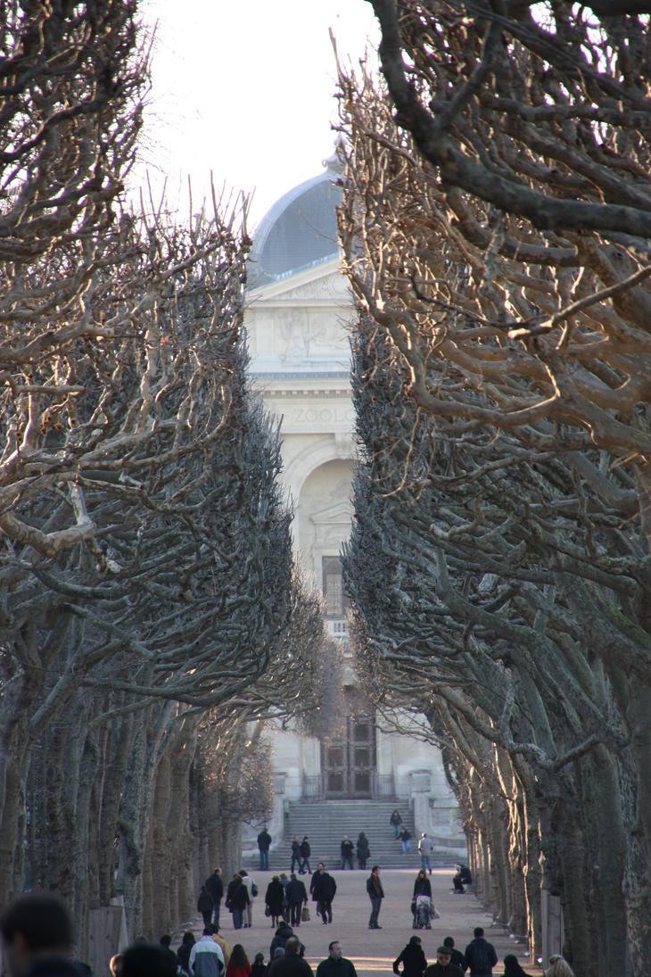 Path trees by Miyu-Maneki