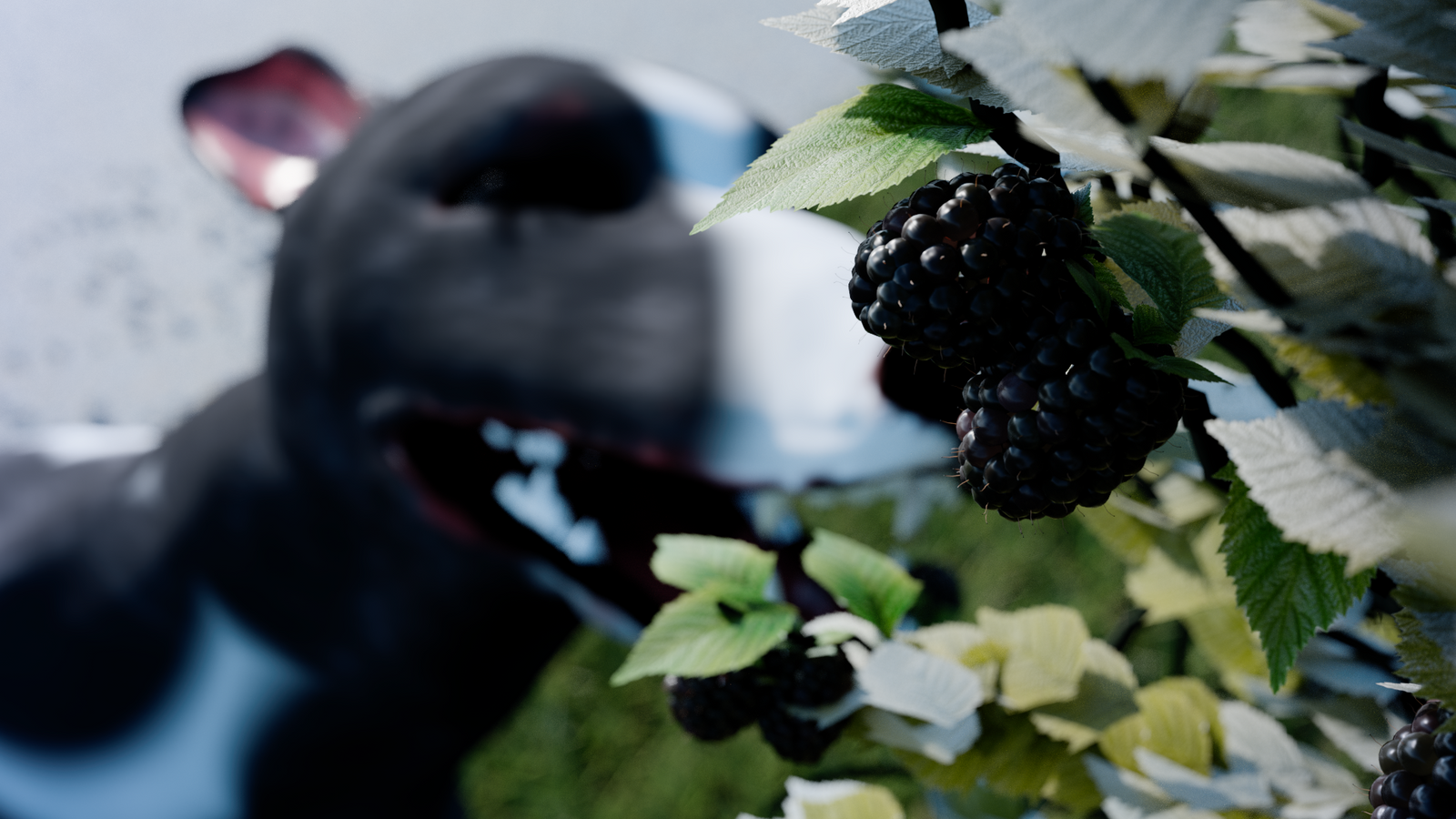 Berry Good Blackberries by TheDuckCow
