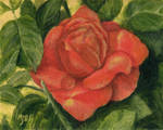 Red Rose by mbeckett