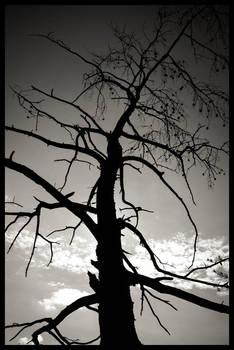 Tree In BW