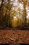 Autumn in the forest 01
