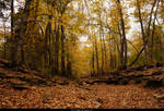Autumn in the forest 02