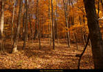 Autumn in the forest 04