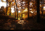Autumn in the forest 05