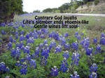 Contrary God laughs