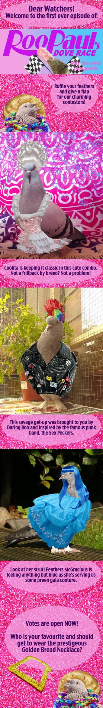 RooPauls Dove Race