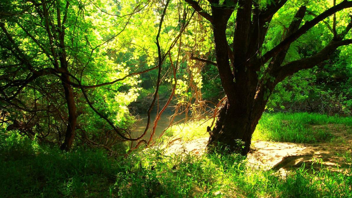 Near the Creek